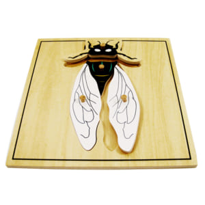 Ghép hình con ruồi