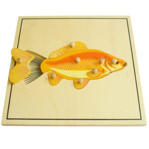 Ghép hình bộ xương con cá