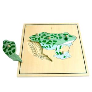 Ghép hình bộ xương con ếch