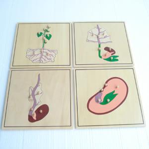 Ghép hình quá trình sinh trưởng của cây